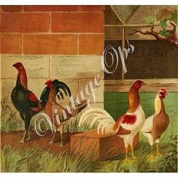 Sierra Valley Flour Sack Towel  | Four chickens on the farm