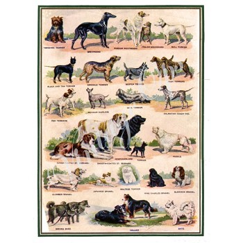 Sierra Valley Flour Sack Towel | Collection of dogs