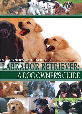 Labrador Retriever: A Dog Owner's Guide-DVD FREE SHIPPING